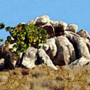 Joshua Tree California Art Print