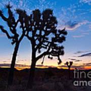 Josua Trees Beautifully Lit During Sunrise In Joshua Tree Nation Art Print