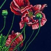 Kara's Poppies Art Print