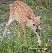 Key Deer Fawn Art Print