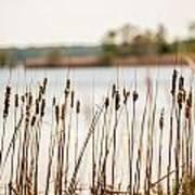 Lake Mattamuskeet Nature Trees And Lants In Spring Time  Art Print