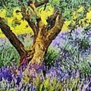 Lavender And Olive Tree Art Print