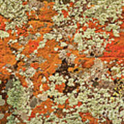 Lichen Abstract Art Print