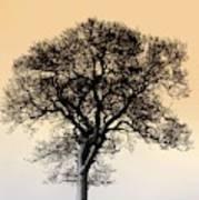 Lone Tree In Field Art Print