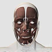 Medical Illustration Of Male Facial Art Print