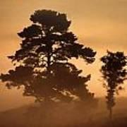 Moorland In The Morning Mist Netherlands Art Print