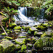 Mt Field National Park Art Print