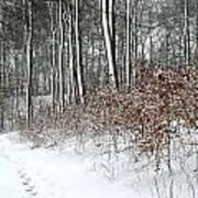Nature In Winter Under Snow In Denmark Art Print