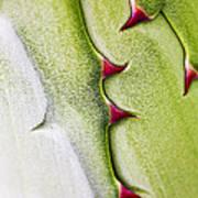 Natures Ornaments Art Print