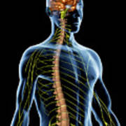 Nervous System Art Print
