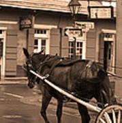 New Orleans - Bourbon Street Horse 3 Art Print