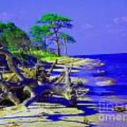 North Florida Beach Art Print by Annette Allman