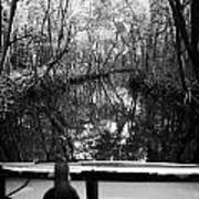On Board An Airboat Ride Through A Mangrove Jungle In Everglades City Florida Everglades Art Print by Joe Fox