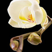 Orchid Print by Ilze Lucero