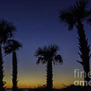 Palmetto Sunset Art Print