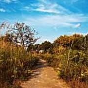 Pathway Through Colorful Fall Autumn Foliage Art Print