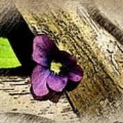 Peeking Violet Art Print