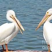 Pelican Pals Art Print