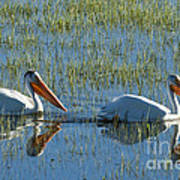 Pelicans In Hayden Valley Art Print