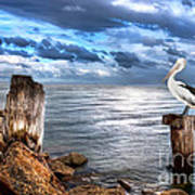 Pelican's Pride Art Print by Shannon Rogers