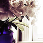 Peony Art Print by HD Connelly