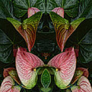 Phyto-photo 1 Art Print