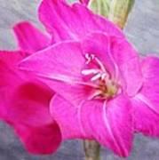 Pink Gladiola Art Print by Cathie Tyler