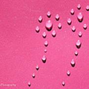 Pink Water Flower Art Print by Kip Krause