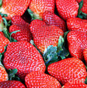 Plant City Strawberries Art Print