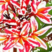 Plantation Plumeria Art Print