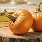 Pumpkins Print by Amanda Elwell