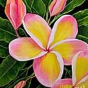 Rainbow Plumeria Art Print