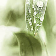 Raindrops On Grass Art Print