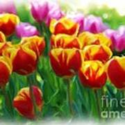 Red And Yellow Tulips Art Print