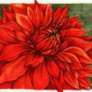 Red Mums Art Print