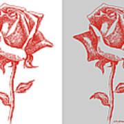 2 Red Roses Poster Art Print