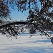 Redbud Tree In Winter Art Print