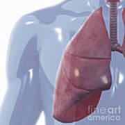 Respiratory System Art Print