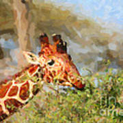 Reticulated Giraffe Kenya Art Print