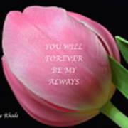Romantic Pink Tulip Art Print