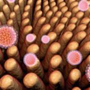 Rotaviruses Infecting Intestine Art Print