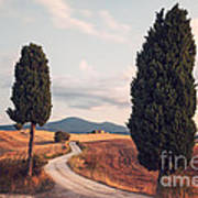 Rural Road With Cypress Tree In Tuscany Italy Art Print by Matteo Colombo
