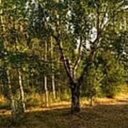 Russian Landscape Art Print