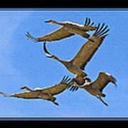 Sandhill Cranes In Flight Art Print