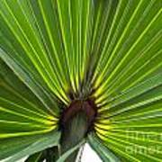 Saw Palmetto  Art Print