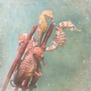 Sea Horses Art Print by Angie Vogel
