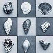 Seashell Composite Art Print