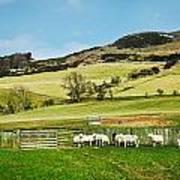 Sheep In Meadow Art Print