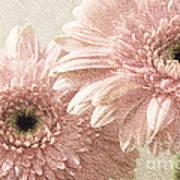 2 Silver Pink Painterly Gerber Daisies Art Print