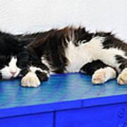 Sleeping Cat In Sifnos Island Art Print